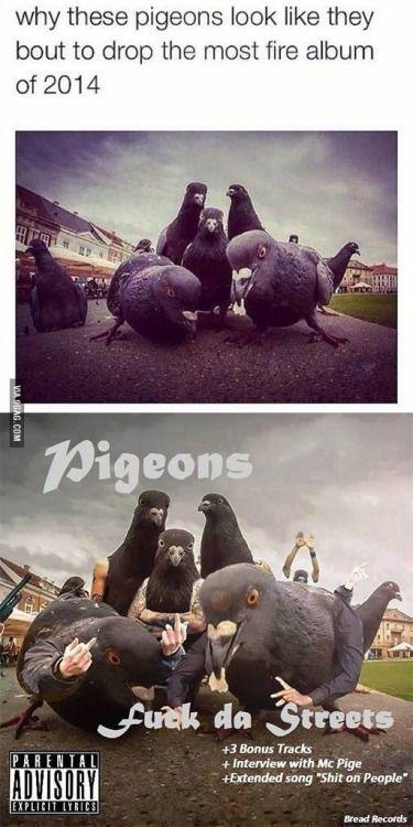 Estas palomas parece que van a sacar el disco más gansta del...XD XD XD