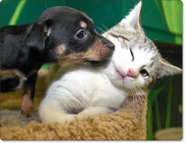 Kisses?