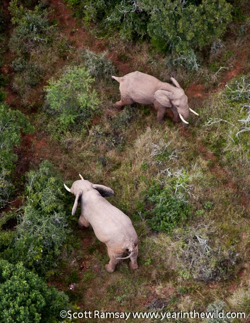 Airborne over Addo Elephant National Park, South Africa