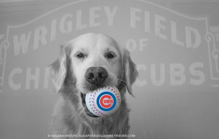 Chicago Cubs Opening Day