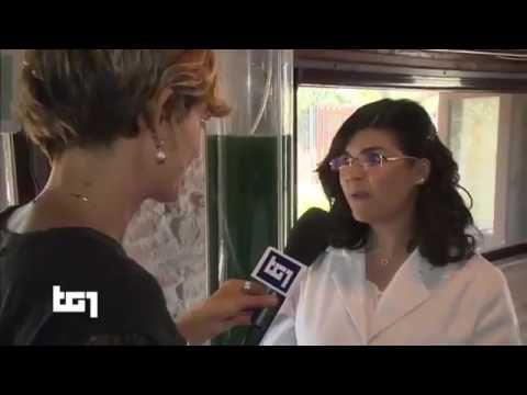La Spirulina.  Servizio al Tg 1.. per info: www.orazio73.dxnitaly.com