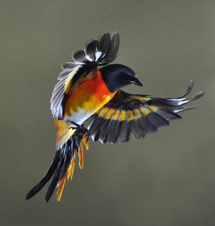 Fly Away By Aris Nunhindarto