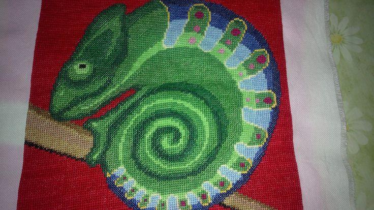 stočený chameleon
