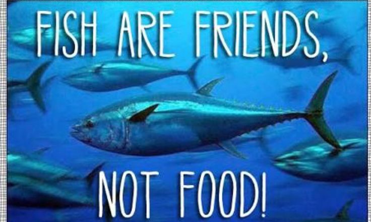 fish are my friends not my food....