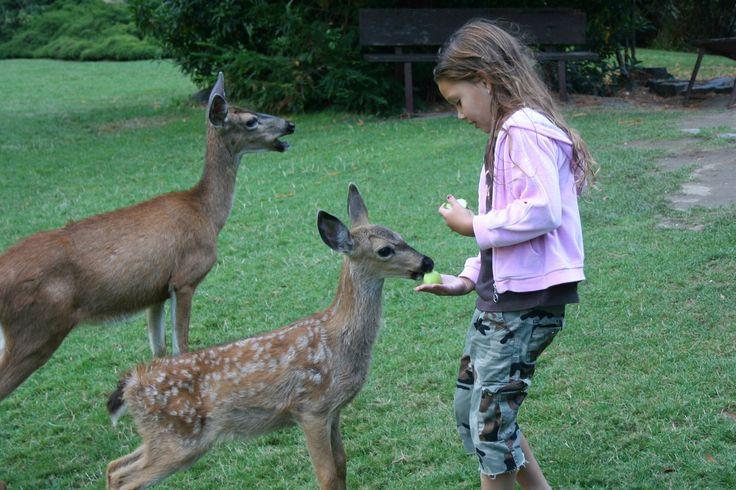 Child feeding deers  - Villetta Barrea  - L'Aquila, Abruzzo