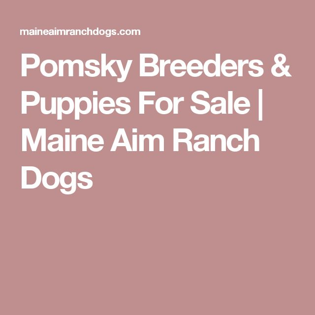 Pomsky Breeders & Puppies For Sale | Maine Aim Ranch Dogs