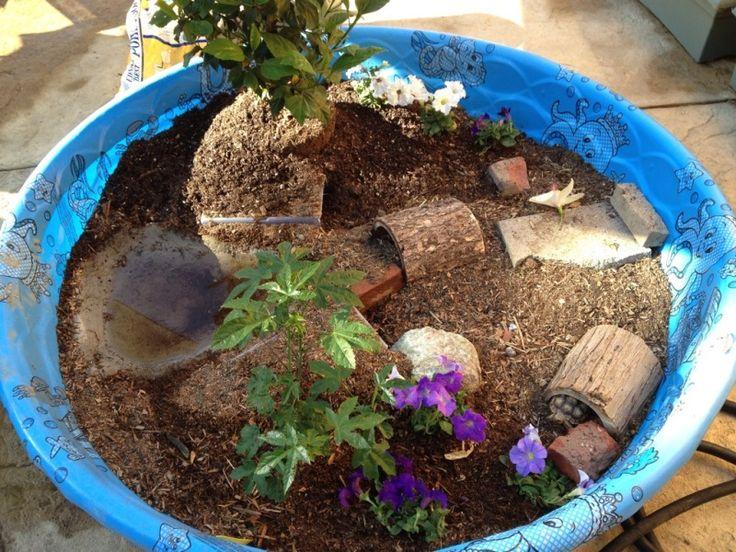 kiddie pool tortoise pen   petdiys   pets pinterest