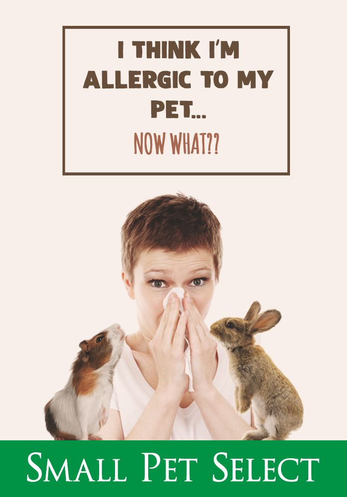 Are you allergic to your rabbit? Here are some things to