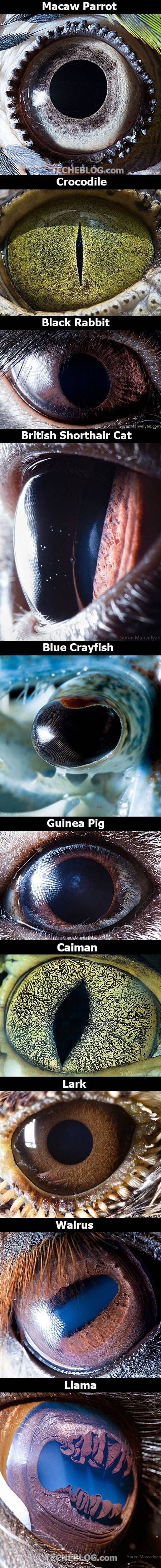 Macro fotografías de ojos de animales.