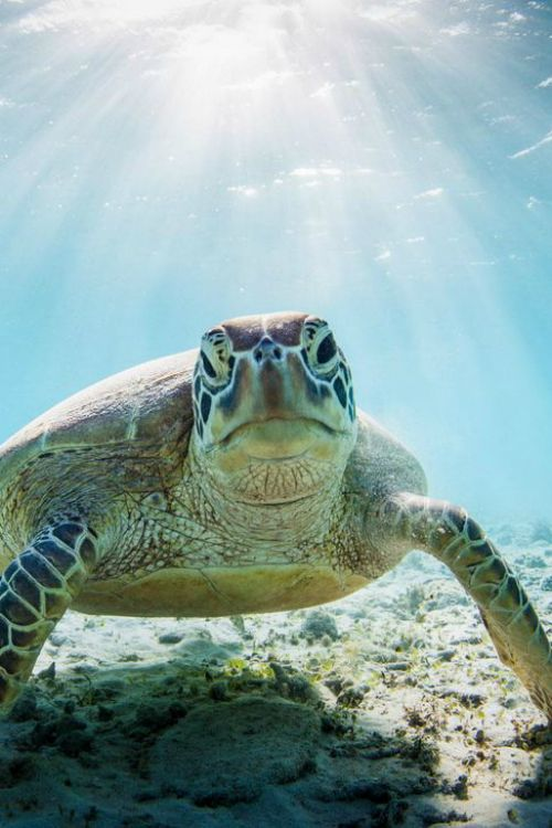 Get your swimming costume on, swap sandals for a pair of flippers and get ready to paddle around with one of Earth's most ancient creatures.