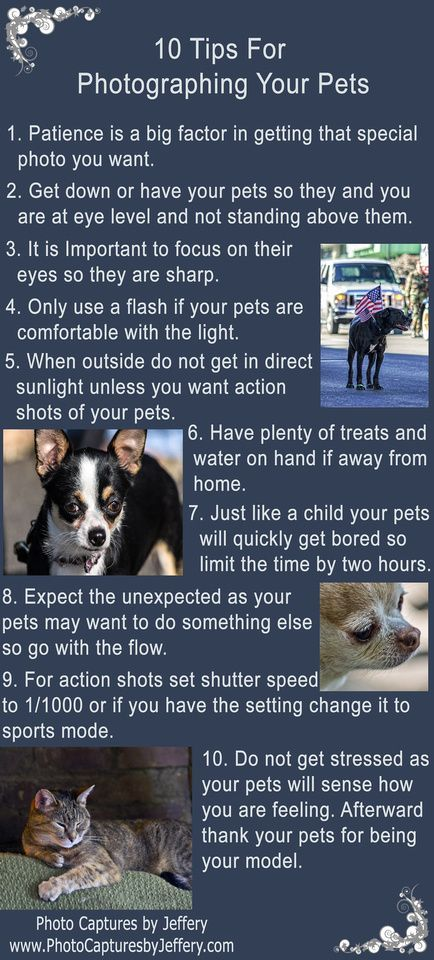 10 Tips For Photographing Your Pets photography animals pets phototips educational infographic