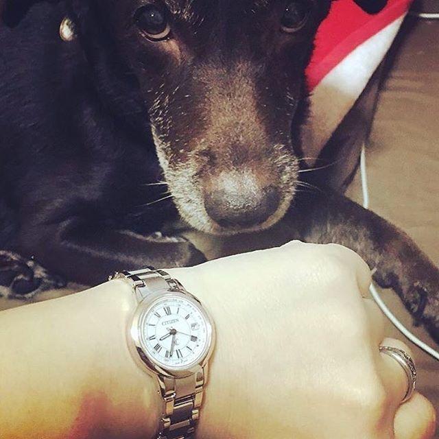 どんなときもそばにいてくれる愛犬は、大切な家族の一員ですね。 大切な家族と同じように、クロスシーもあなたのすぐそばで一緒に過ごしていきます。 こちらの素敵なお写真は @aoiiiii_gram さんの1枚です。 -------------------------------------------- クロスシーフォトギャラリーでは、xC(クロスシー)にまつわるみなさんの素敵なお写真をご紹介しています! #クロスシーフォトギャラリー のハッシュタグをつけて投稿いただくと、当アカウントでご紹介させていただくことがありますので、ぜひみなさんも投稿してみてくださいね! -------------------------------------------- #クロスシー #xc #シチズン #citizenwatch #citizen #時計 #ウォッチ #腕時計 #腕時計くら部 #腕時計好き #時計ベルト #時計好き #手元 #手元くら部 #手元倶楽部 #ファッション #今日のファッション #大人ファッション #ファッションコーデ #コーデ #今日のコーデ #大人女子コーデ…