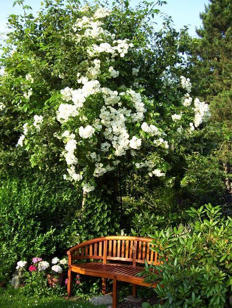 745 best planten in mijn tuin images on pinterest tuinplanten bloemen en planten. Black Bedroom Furniture Sets. Home Design Ideas