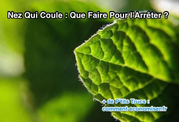 Adieu à la petite rhinite empêcheuse de respirer correctement. Faites-vous tout simplement quelques infusions à la menthe pendant un jour ou deux :-)  Découvrez l'astuce ici : http://www.comment-economiser.fr/nez-coule-que-faire.html?utm_content=buffer63922&utm_medium=social&utm_source=pinterest.com&utm_campaign=buffer