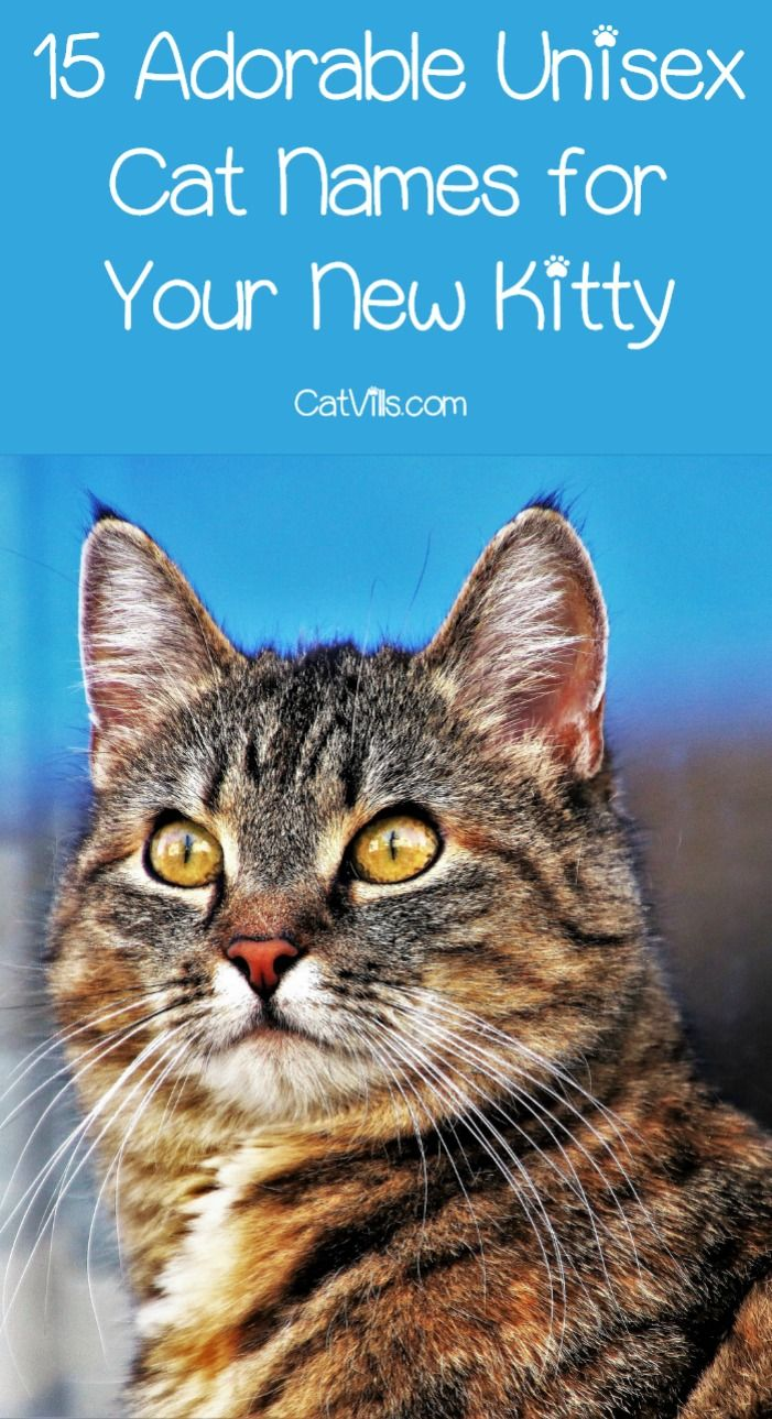 15 Unique Adorable Unisex Cat Names Cat Names Boy Cat Names Cute Cat Names