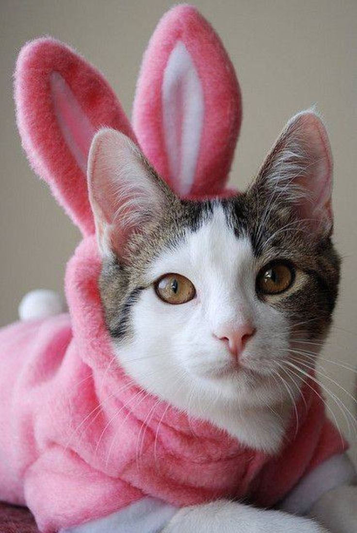 Kitty As Easter Bunny Easter Cats Cats And Kittens Cute Dogs