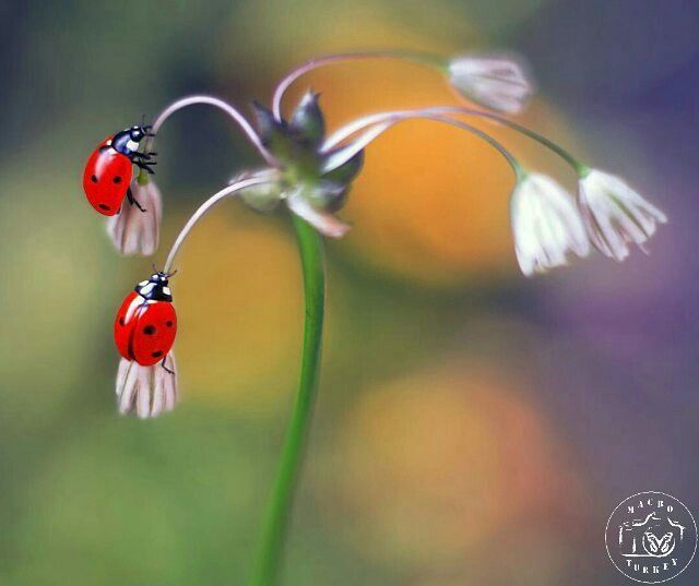 Pretty bugs