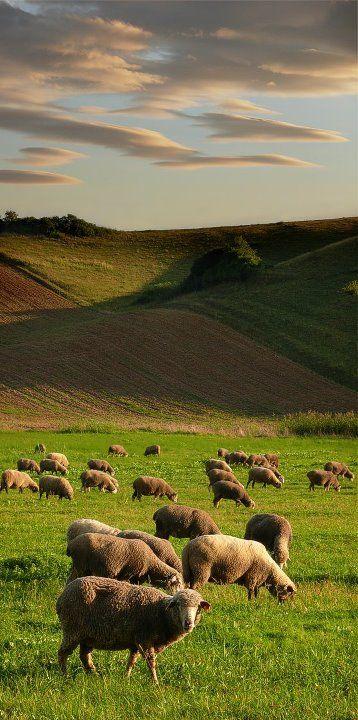 #countryside #Slovakia - Péter Garp Kovács