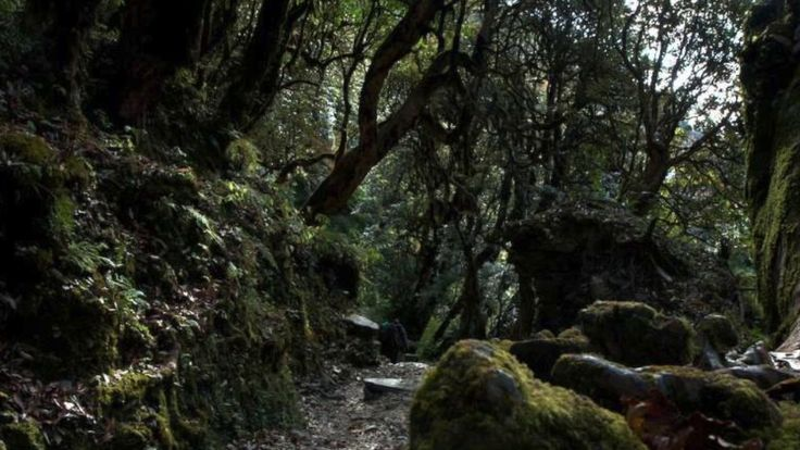 Haunted forest [electronic theme] - YouTube