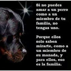 Amor hacia los animales