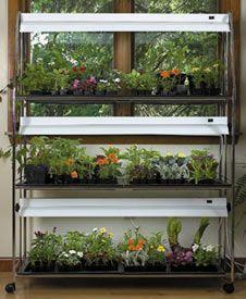 34 Best Indoor Garden Images On Pinterest