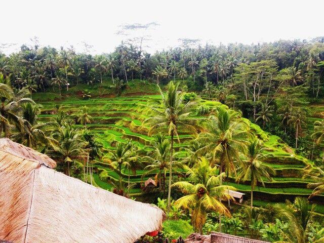 Tegalalang, Ubud Bali