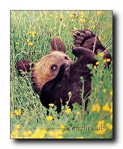 Wow it's amazing! If you want to bring a touch of humor into your room hang this beautiful wall poster which displays the image of cute Grizzly bear cub playing in a ground in between the flowers which will bring the beauty of nature and add a charm into your home and grab lot of attention. It will be a great addition to any home décor and ideal for every animal lover. Hurry up and buy this product for its durable quality and high degree of color accuracy.