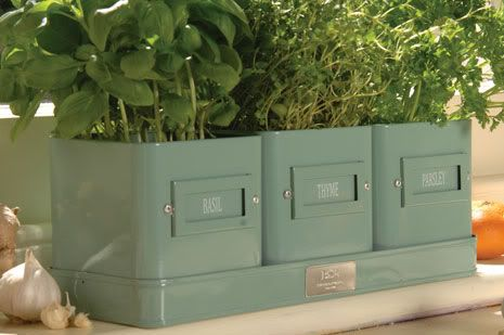 Metal Tins turned planters