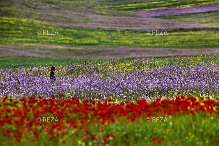 """Azerbaijan, Lerik District, June 1, 2011 A woman stands amidst fields of wildflowers on the foothills of the mountains in Lerik. She wears a head covering to shield herself from the dust and the oppressive heat. Lerik has earned a reputation for being the """"home of those who live to a greatage."""" #Azerbaijan #Eleganceoffire #Rezaphoto"""