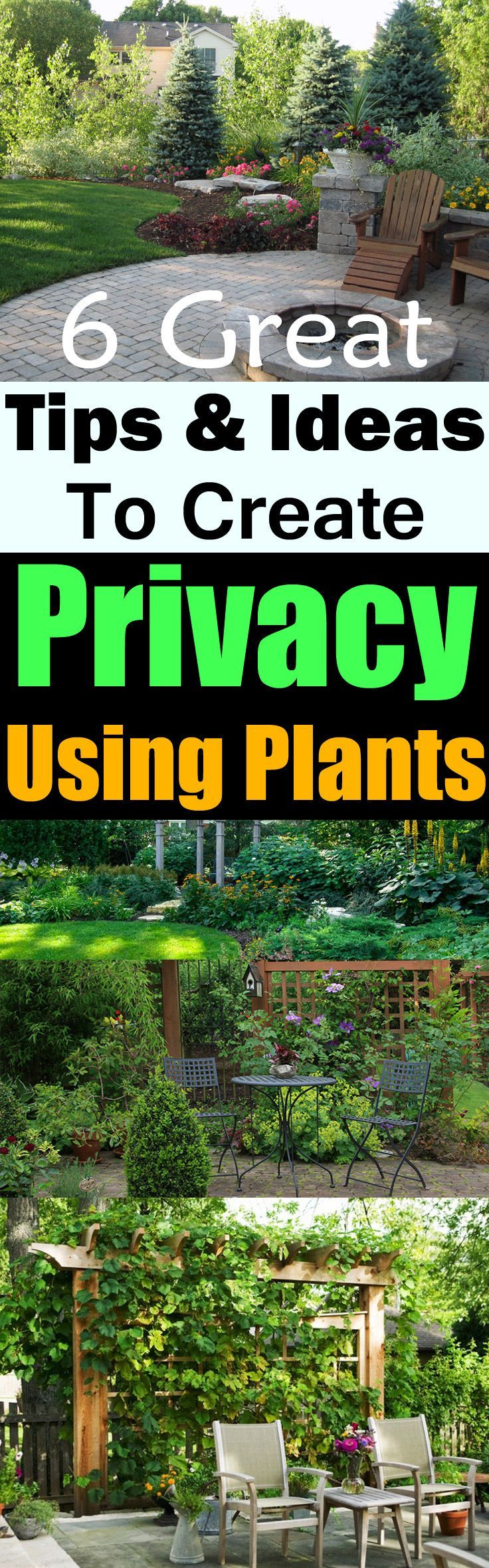 If you want to create privacy to save yourself from prying eyes, Use plants…