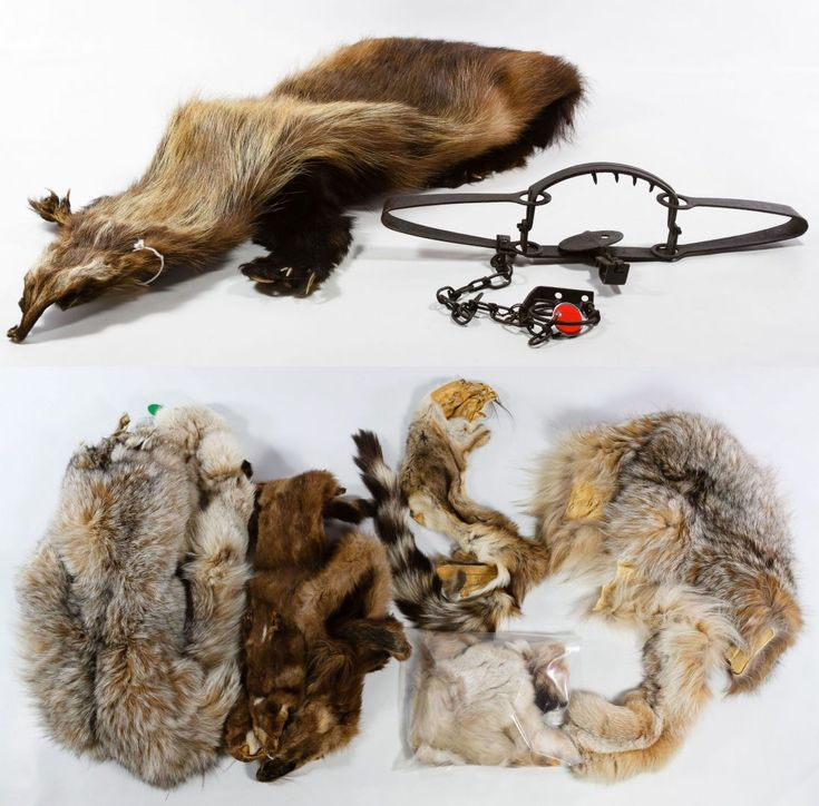 Lot 310 Wolverine Lynx Mink Pelt Assortment Including An Alaskan With Fur Leather And Claws A 3 Pelts
