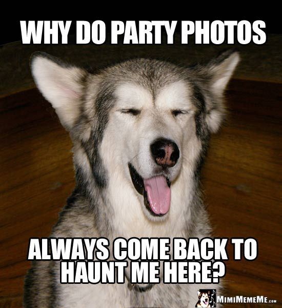Bitchin' dog party jokes, partying dogs humor, funny canine celebrations,  hilarious party dog photos, happy celebrating canine comedian memes to  share with ...