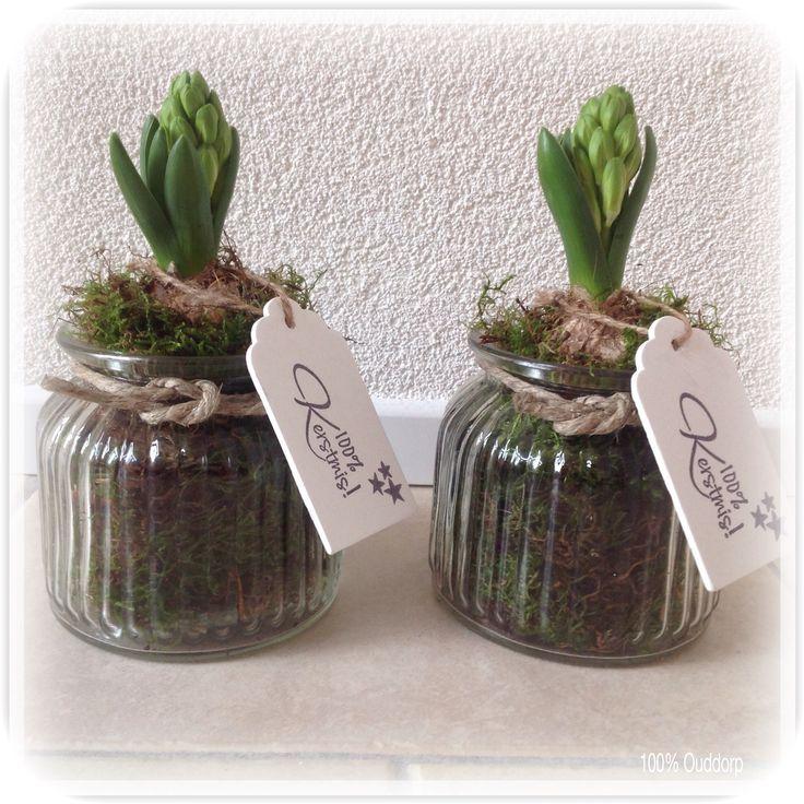 Potjes gevuld met mos en hyacinten bol. Met bestempeld label