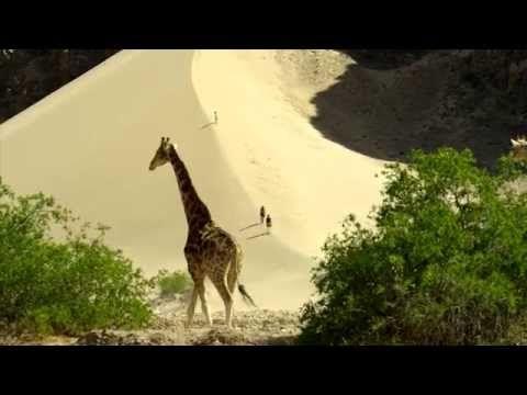 Namibia's Green Desert | DiscountedAfricanSafaris.com