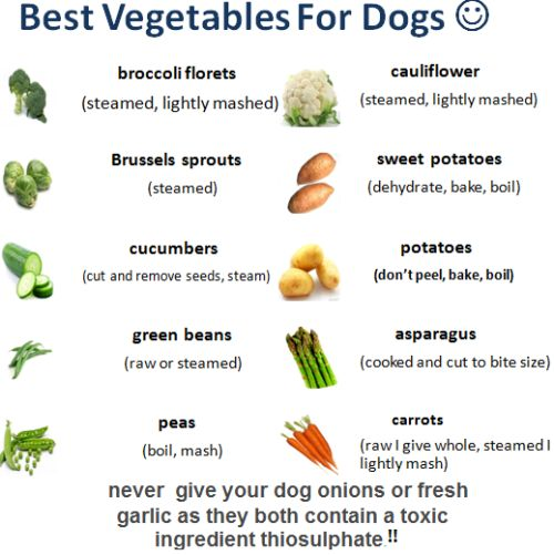 What Vegetables Can Dogs Eat List