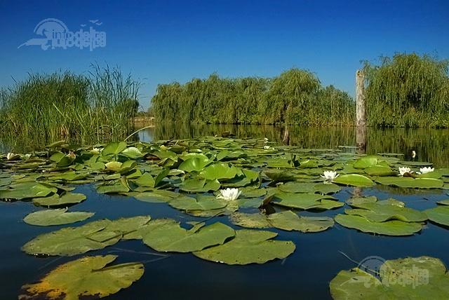 Delta Dunarii, Romania