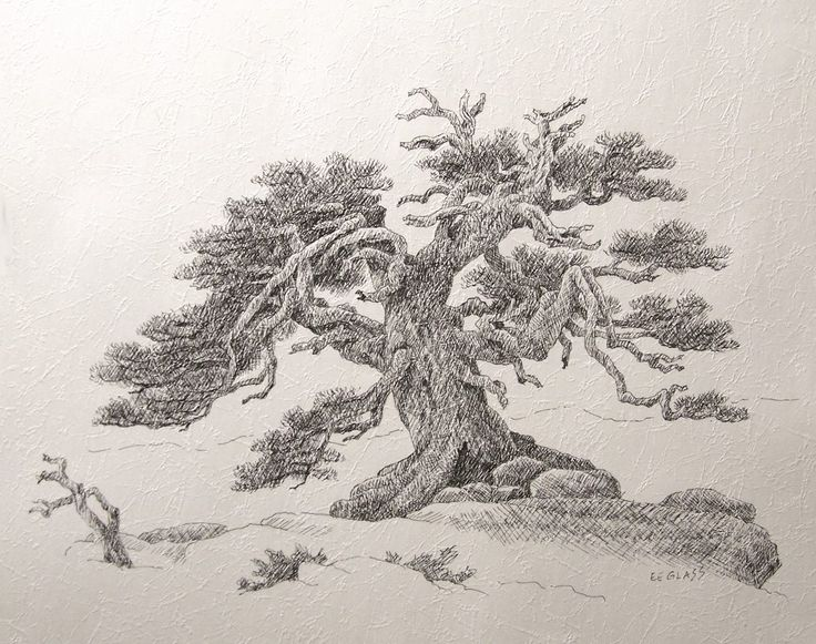 Old Trees Drawing