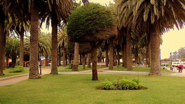 Parque Ross, Pichilemu