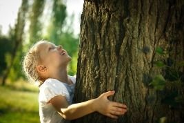 Don't Plant the Wrong Type of Tree  http://mrlandscaper.ca/dont-plant-the-wrong-type-of-tree/