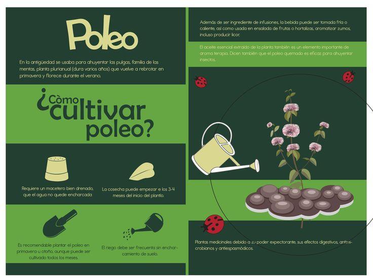 """Catalogo """"Verdees"""" pagina 2 y 3"""
