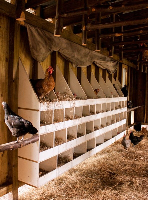 21 best chicken images on pinterest hen house chicken for Free range chicken coop plans
