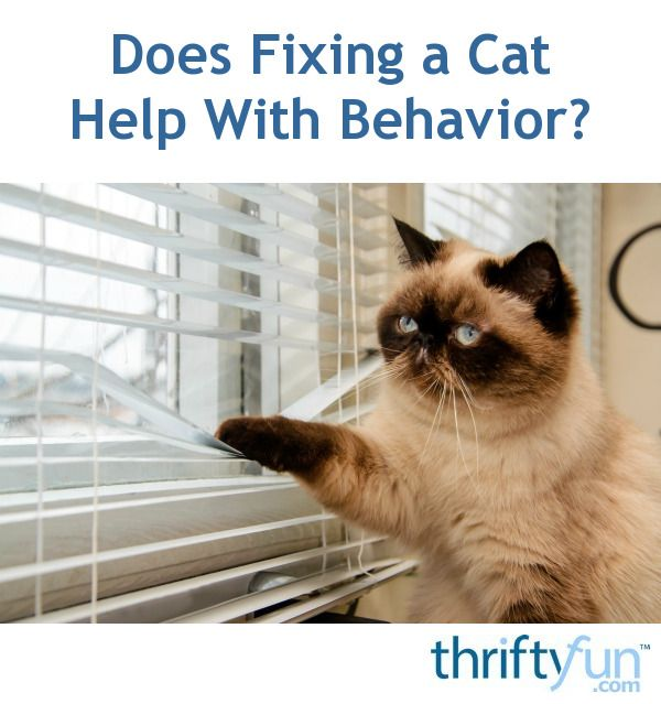 85 best cat behavior images on pinterest cat facts cat stuff does fixing a cat help with behavior sciox Image collections