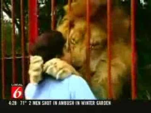 Pelukan Singa terhadap orang yg menyelamatkannya.
