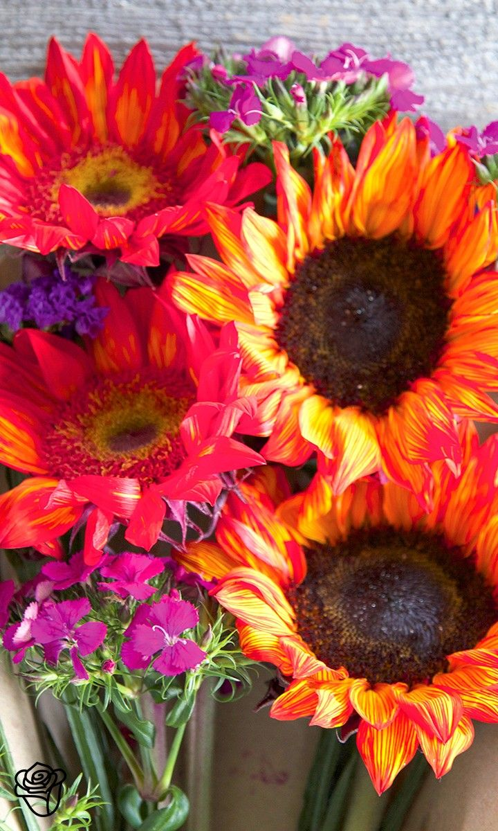 """Send the Bouqs epic flowers from an eco-friendly, sustainable farm to your recipient""""s door."""