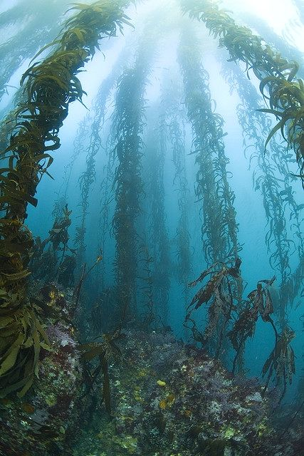 Kelp Forest by Lee Root             The lovely seas.
