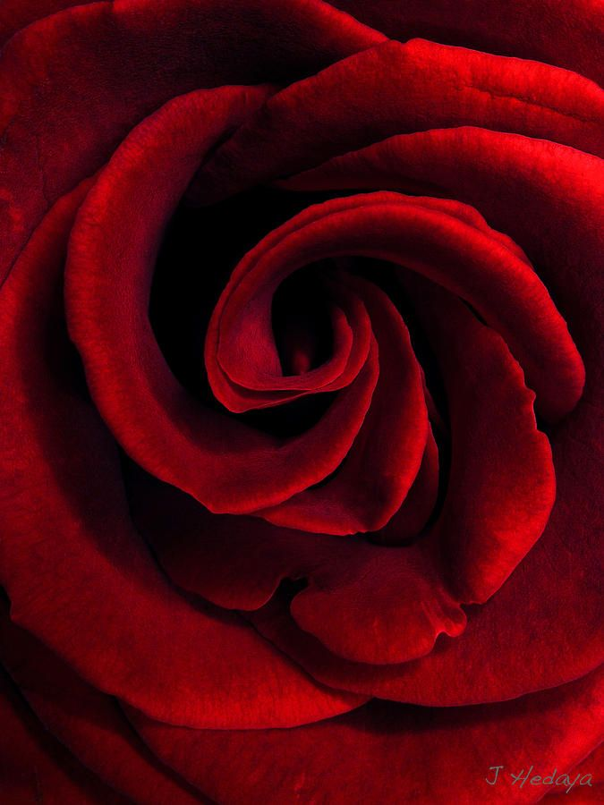 ✯ I just  love roses!!