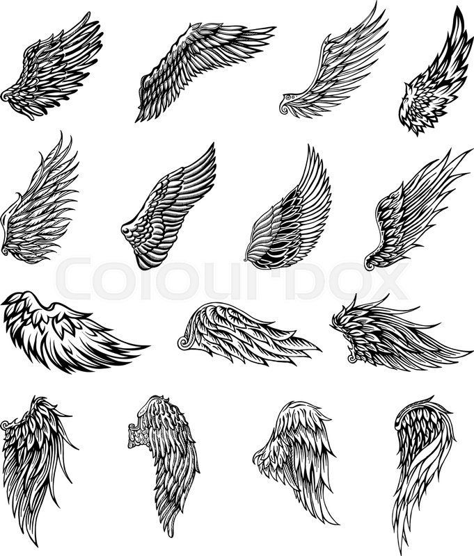 Stock Vector Of Heraldic Wings Set For Tattoo Or Mascot Design Vector Graphic Illustration Wings Tattoo Eagle Wing Tattoos Wings Drawing