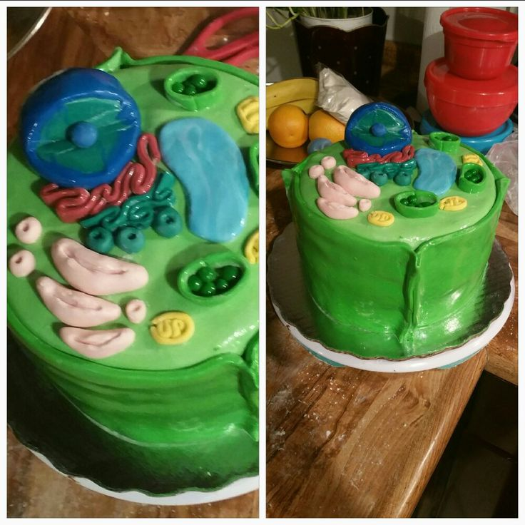 Célula vegetal cake