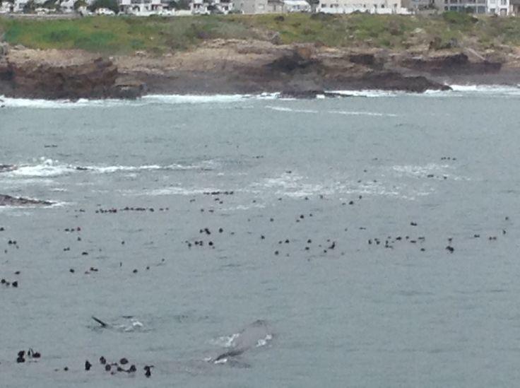 Kan du se hvalerne?