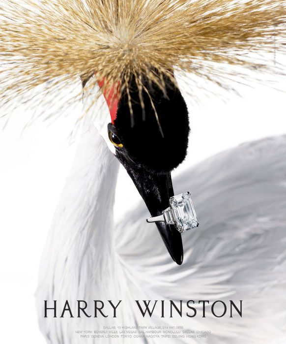 Harry Winston CoffeeTable book. Have the book, need the ring!